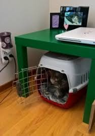 Cat Carrier in Living Room