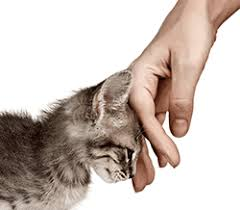 Cat Rubbing Hand