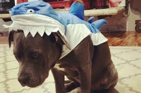 Unhappy Dog in Costume
