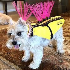 Dog Wearing Coyote Vest