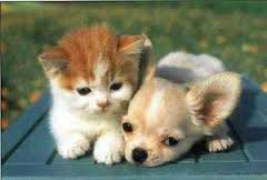 Cute Kitten and Puppy