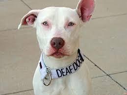 Deaf Dog.