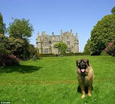 Dog in Front of Castle