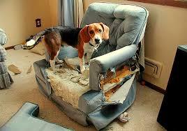 Dog Destroys Chair