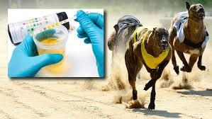 Drug Testing on Greyhound