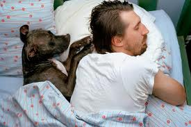 Dog sleeping in bed with human
