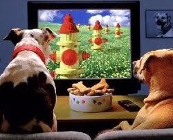 Dogs watching television.639