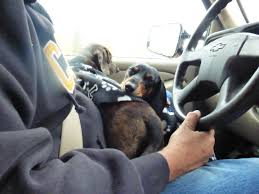 Man Driving with Dog on Lap