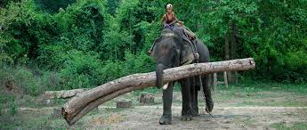 Timber Elephant