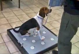 Elvis the Beagle