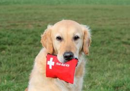 Dog holding emergency kit