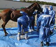 Equine Herpes outbreak