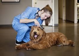 Examining Dog on Floor