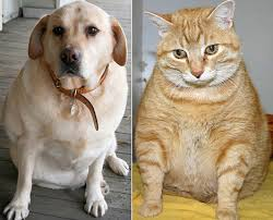 Obese Dog and Cat