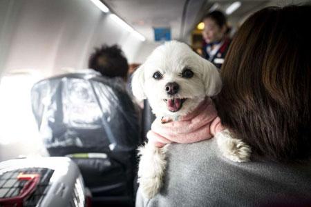 Frequent Flier Pet Programs
