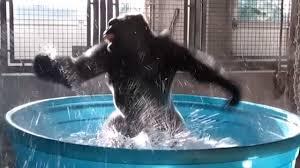 Zola in Pool