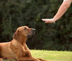 Dog Hand Signal
