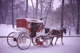 No more Central Park Horse Carraiges