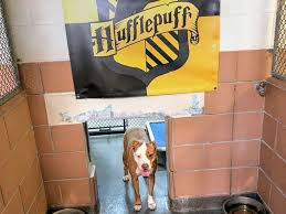 Hufflepuff Dog