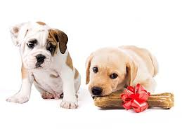 Jealous Puppy