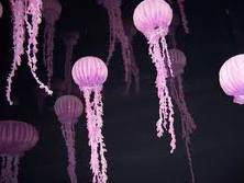 Multiple Jellyfish