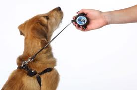 Leash Locket on dog.668