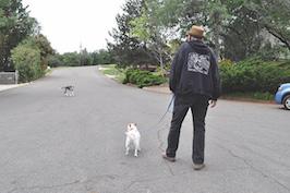 Approaching Loose Dog