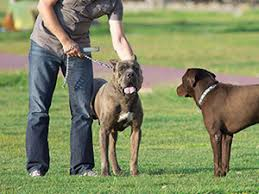 Loose Dog Approaching Leashed Dog