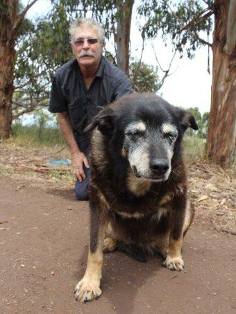 Worlds Oldest Dog