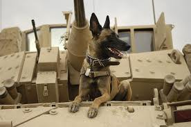 Military dog on tank