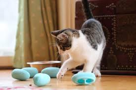 No Bowl Cat Feeding System