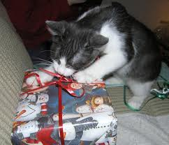 Cat chewing on wrapped Chirstmas present
