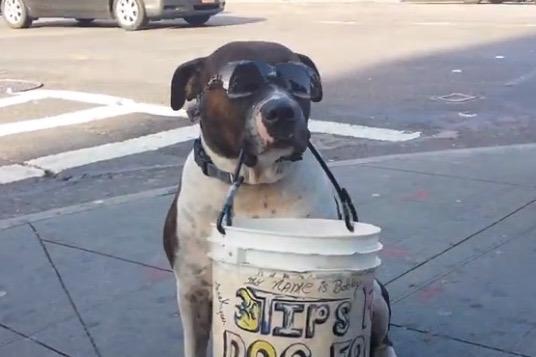 Panhandling Dog