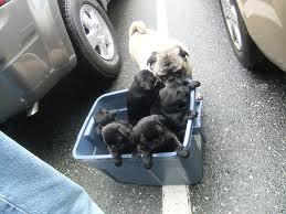 Puppies being sold in parking lot