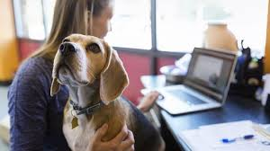 Dog in an Office