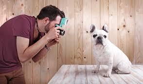 Man Taking Photo of Dog