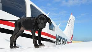 Dog on plane wing