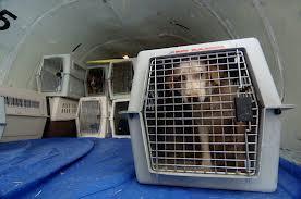 Dog in Plane Cargo