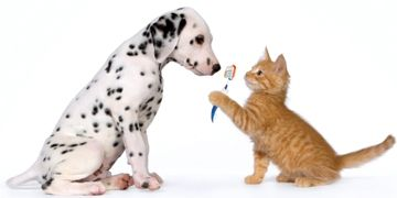 Puppy and Kitten with Toothbrush
