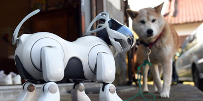 Robot Dogs?