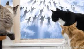 Pets After Rapture