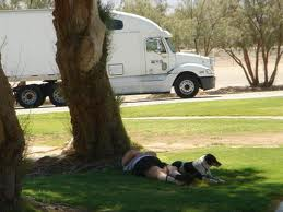 Trucker at rest stop with dog