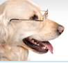 Senior Pet Products Logo