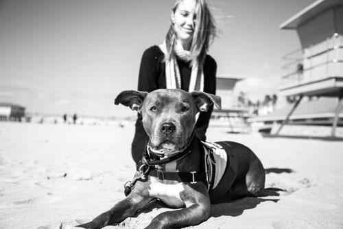 Pit Bull Service Dog