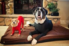 Dogs Wearing Shed Defender