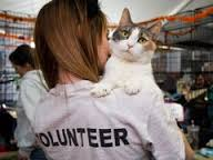 Shelter Volunteer