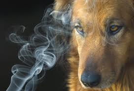 Dog in smoke