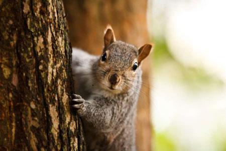 When Squirrels Attack
