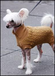 Dog wearing a fashionable sweater