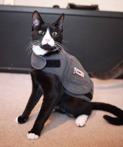 Cat Wearing ThunderShirt